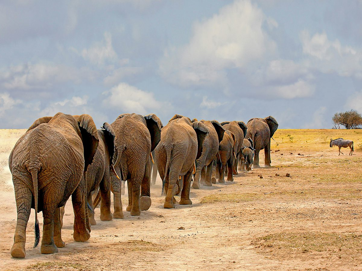 Elephants in Search of Water