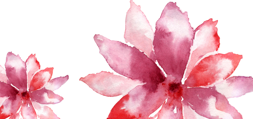 pink flower with petals on white background